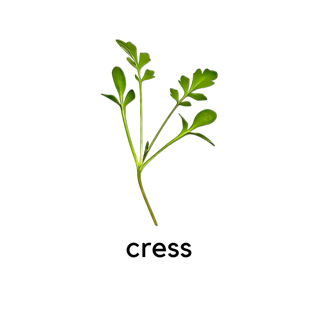 Micro Greens Cress
