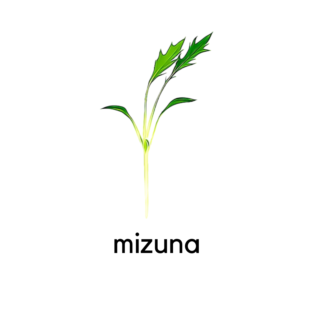Micro Greens Mizuna