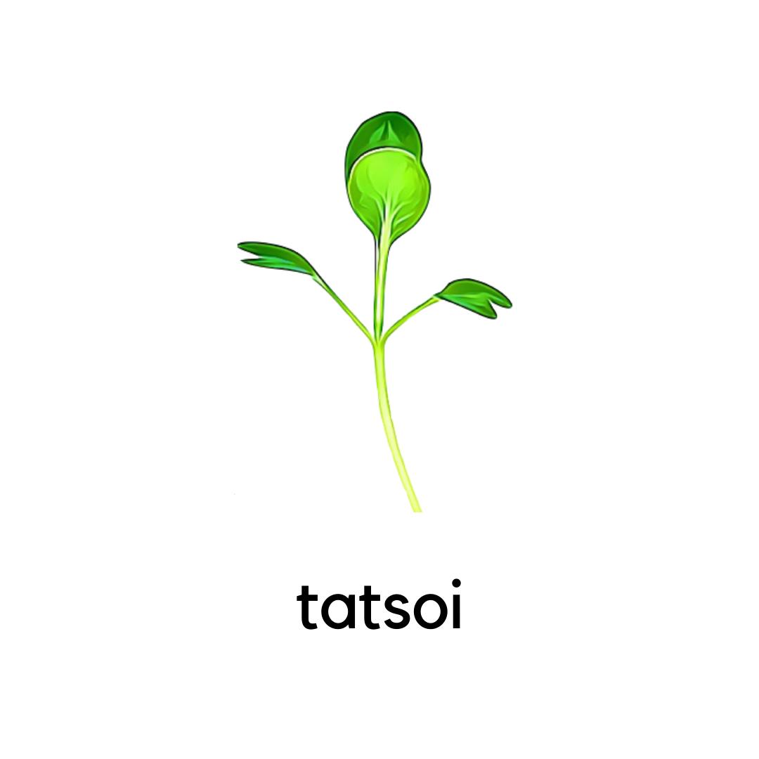 Micro Greens Tatsoi