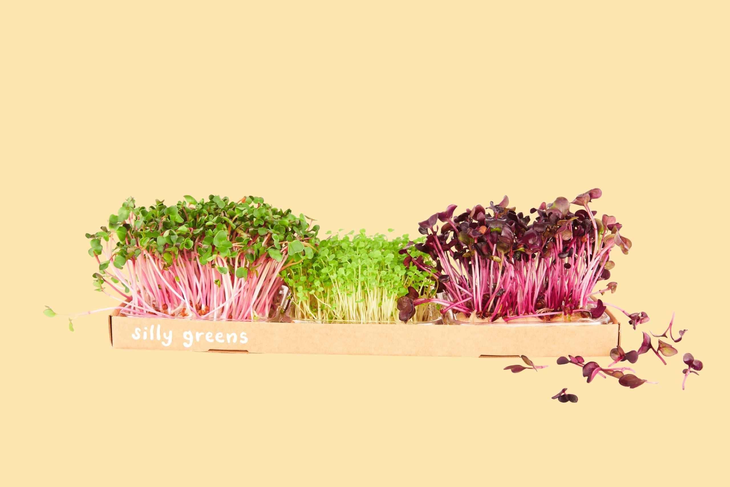 Microgreen grow box