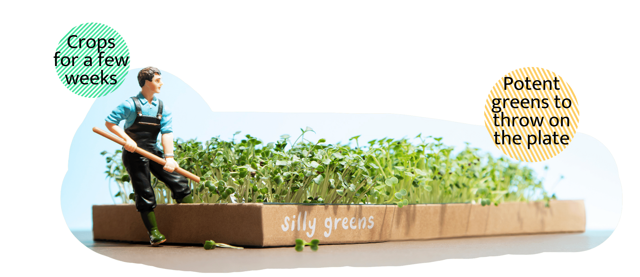 Micro Green living grow box
